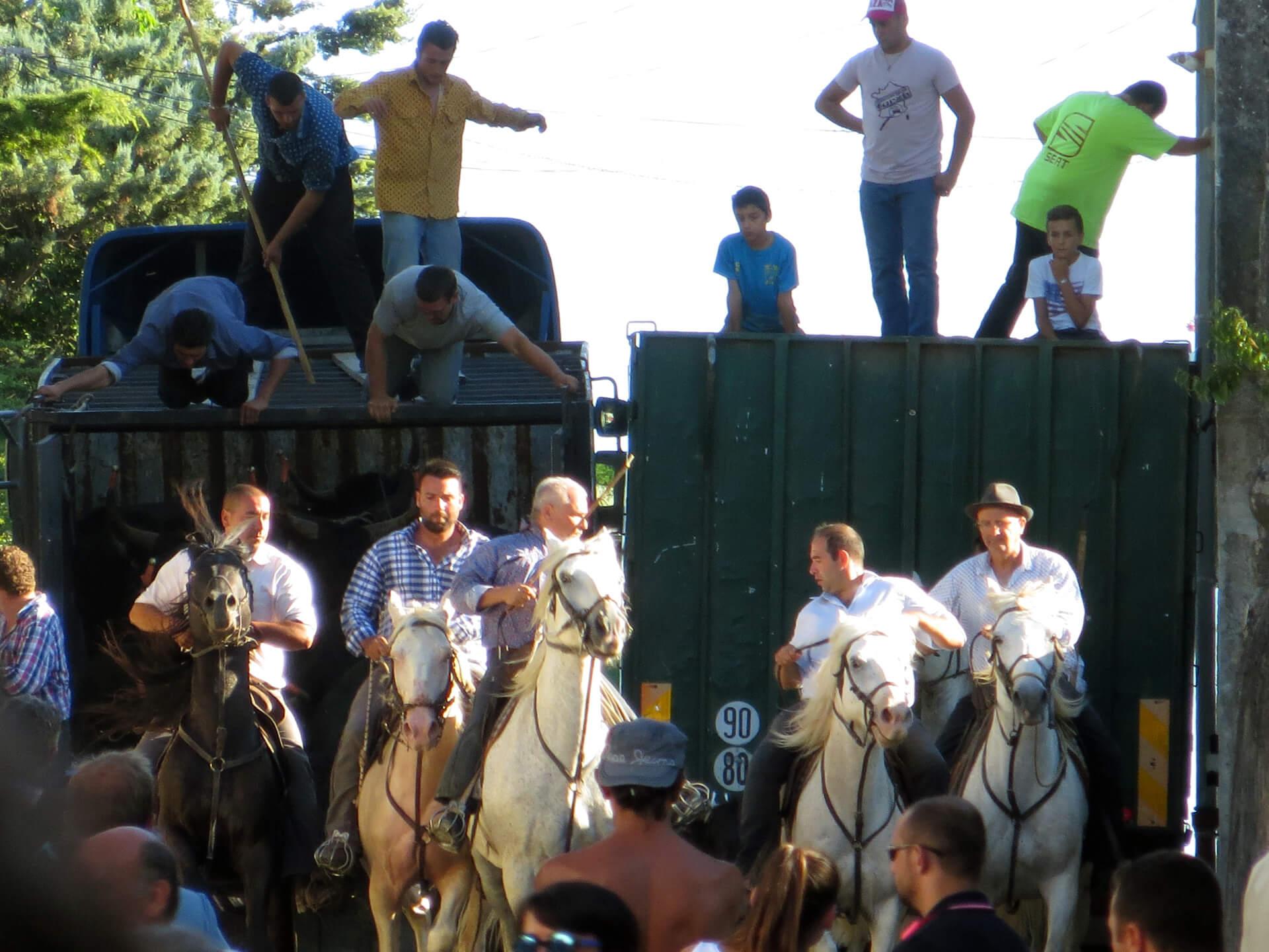 Lâcher des taureaux dans une fête votive